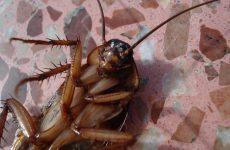 Ето как да се отървем от хлебарки лесно и ефективно